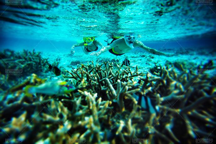 马尔代夫07月客照之相伴潜水
